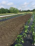 Turley Farm