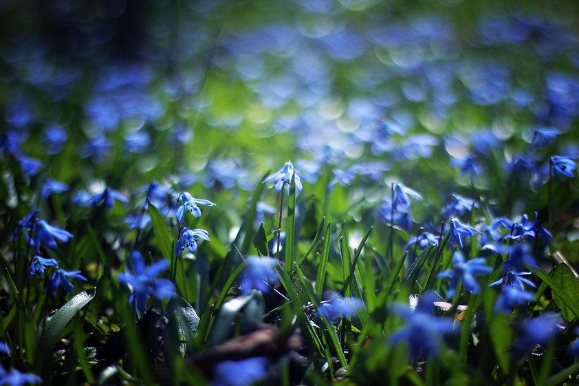 close-up-photo-of-blue-petaled-flower-du