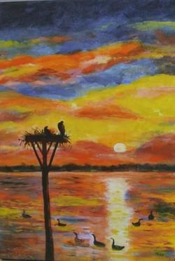 Ospreys at Sunrise