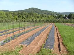 tomato-pan-2.jpg