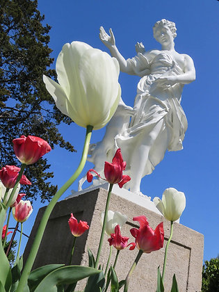 Diana and her tulips at Chatham would love to grace your walls