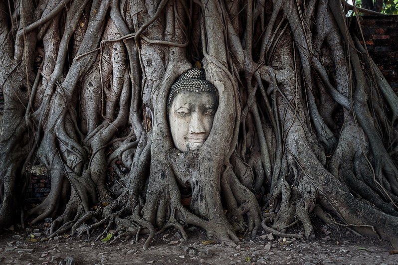 Petite Taway Buddhist Business