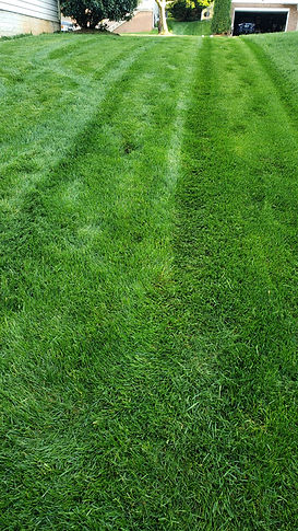 green lawn virginia