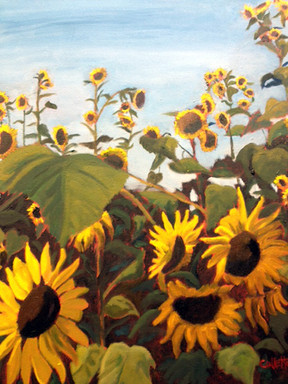 Symphony of Sunflowers