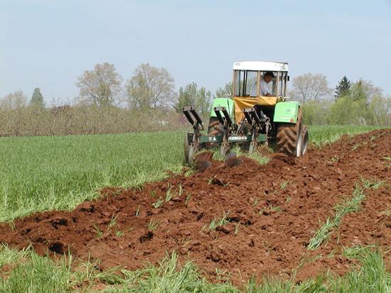 Tom-plowing2.jpg