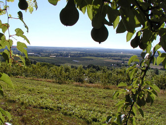 Farm-View-from-the-top.jpg