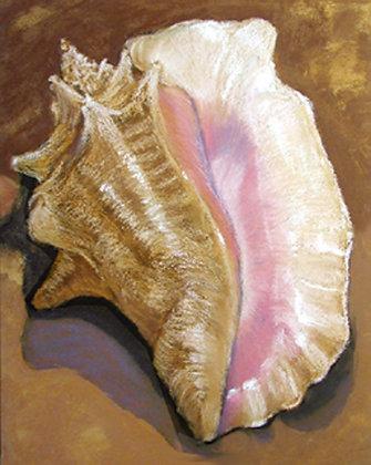 Conch