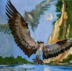 Osprey at Fones Cliff