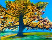 Stacy Gerise, California Oak, 16x20, Acrylic, $350