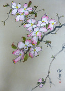Pink Dogwood Blooms