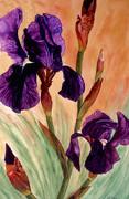 Iris 1 -  Watercolor