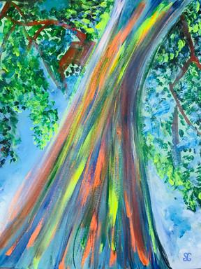 Stacy Gerise, Rainbow Eucalyptus, 16x20, Acrylic, $300