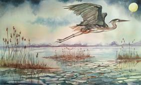 wFlying Blue Heron.jpg