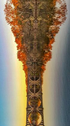 A Bridge Bloom