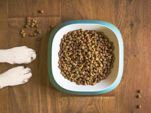 Feeding Your Pet