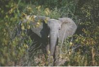 Zimbabwe - Hawanga Nat. Reserve.jpeg