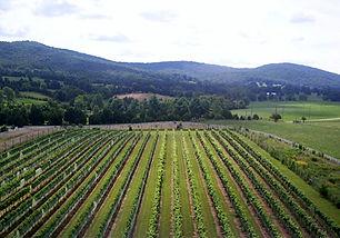 Chesnut-Oak-Vineyard.jpg