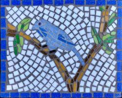Perching Bluebird
