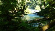 Mackenzie River at Sahalie Falls 2.jpg