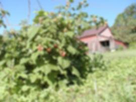 Red-Rasp_Barn.jpg
