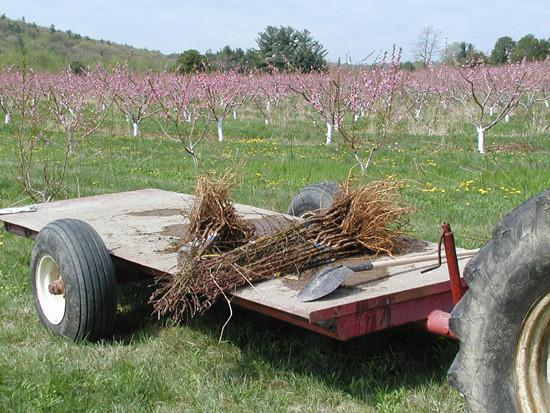 Planting-trees-on-wagon.jpg