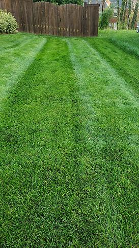 virginia lawn installation