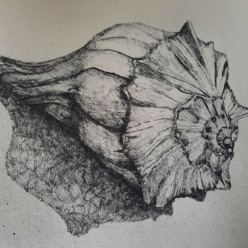 Learning to See, Beginning Drawing Class ( 3 Classes)