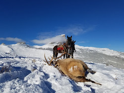 Elk and Chief Mountain