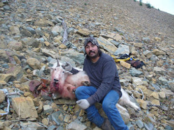 Baloo mountain goat.jpg