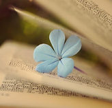book-pages-flower-mood.jpg