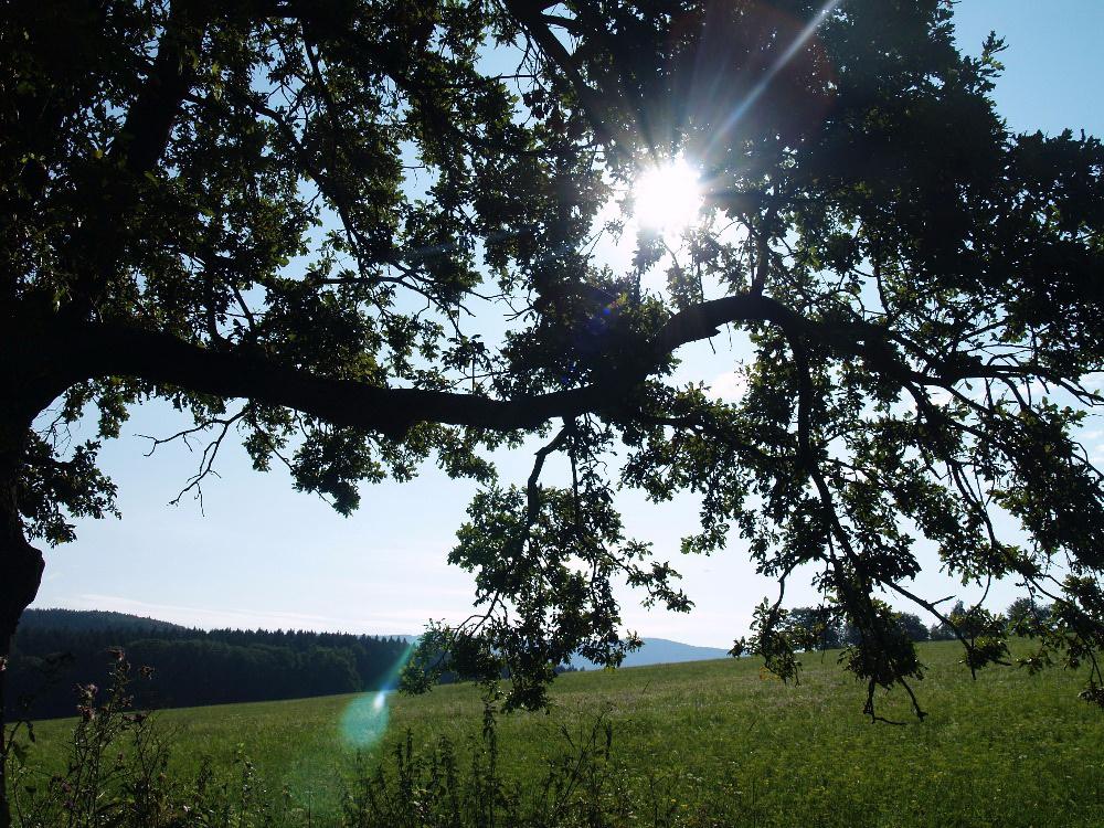 strom-u