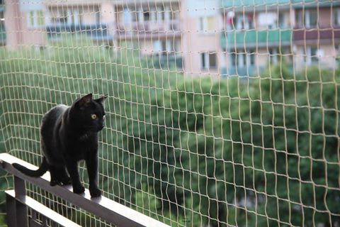 Balcony Net for cats and birds +50 fastnet + 1 Silicone
