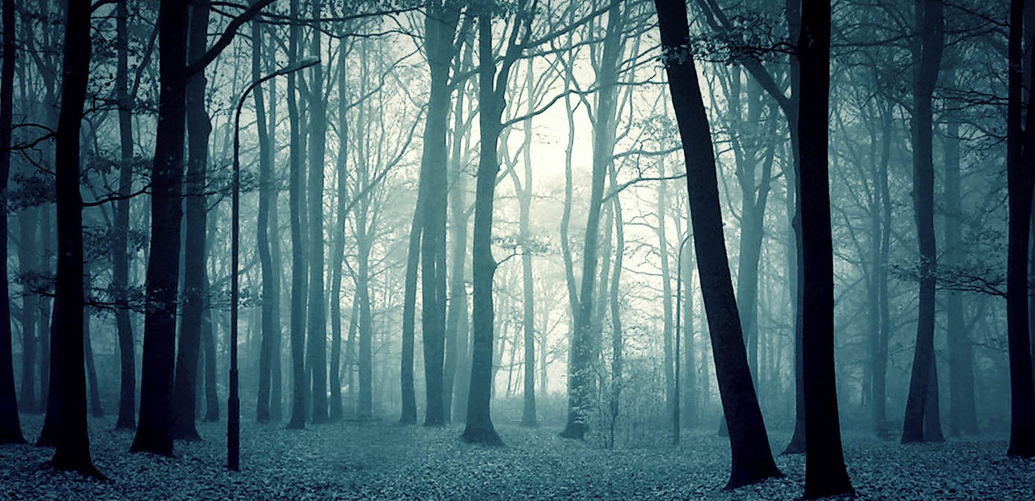 scary_forest_wallpaper_003.jpg