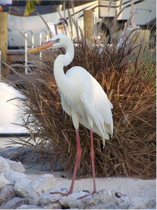 Florida Keys Wildlife