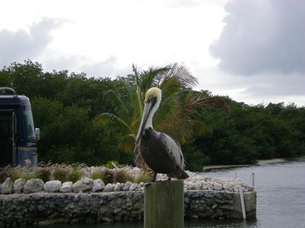 Grassy Key RV Park & Resort Florida Keys