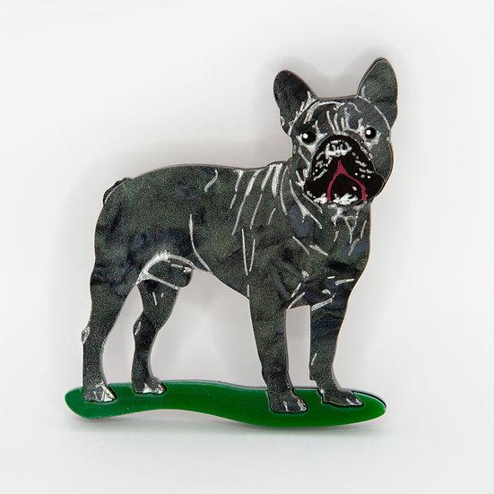 Freddy the French Bulldog