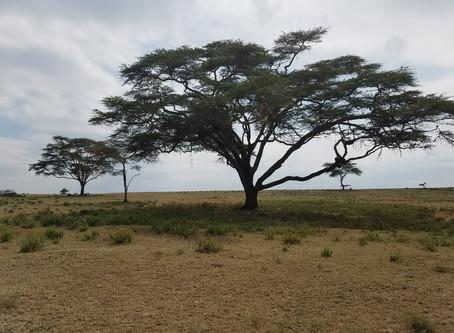 Kenya 2019 - Prologue