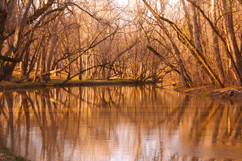 Soft Water and Trees.jpg