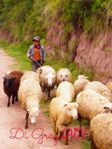 Sheep Hearder
