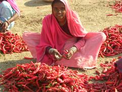 India, Chili Momma