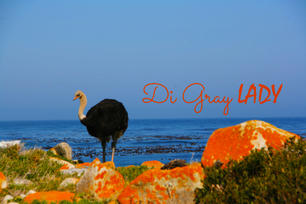 Ostrich In Orange