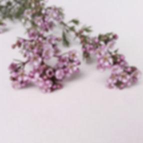 contact us floraison studio