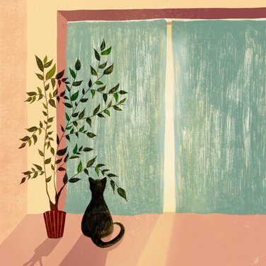 Window kitty