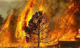 web forest fire.jpg