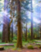 web trees.jpg