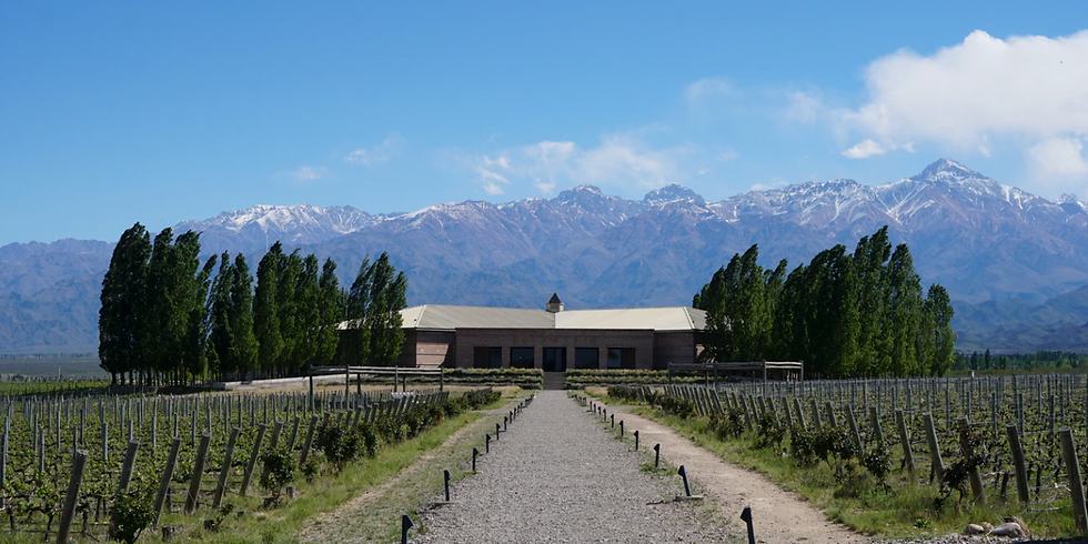 Deep Dive Tasting: South America - A Wine Journey