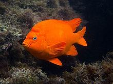 Garibaldi-givers-lagoon-foundation-pelic
