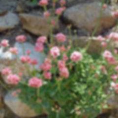 agua-hedionda-lagoon-plant-garden.jpg