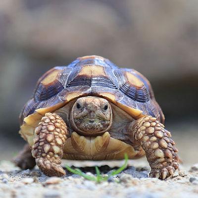 agua-hedionda-reptiles-tortoise.jpg