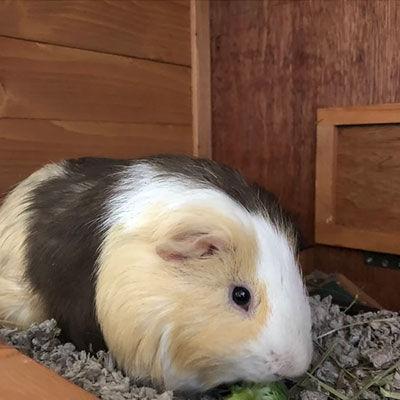 agua-hedionda-lagoon-hank-the-guinea-pig